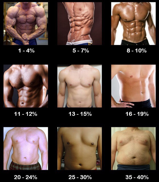 what bodyfat percentages look like