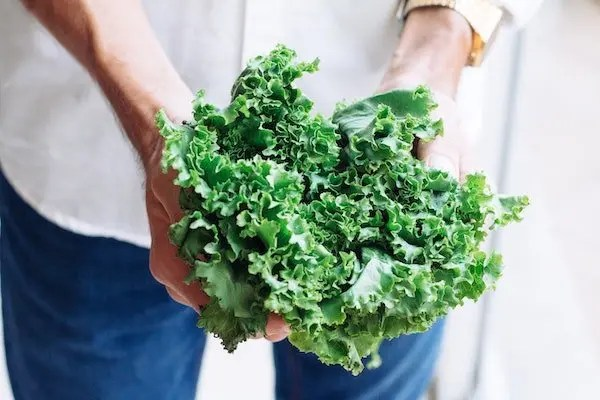 kale is a healthy low carb vegetable