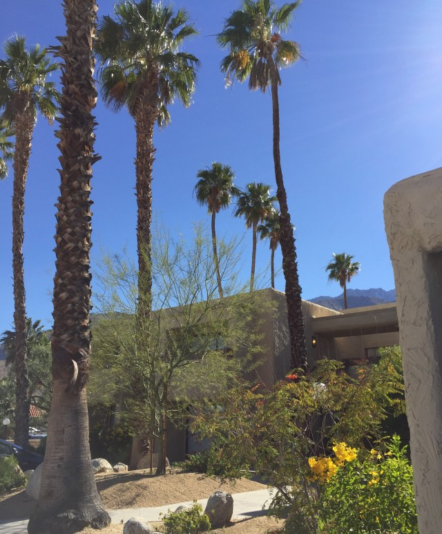 Palm Springs Tourism And Holidays Best Of Palm Springs: Desert Vacation Villas In Palm Springs