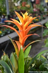 dsc_5428-haverhill-ghaa-nunans-parrot-plants-and-painters