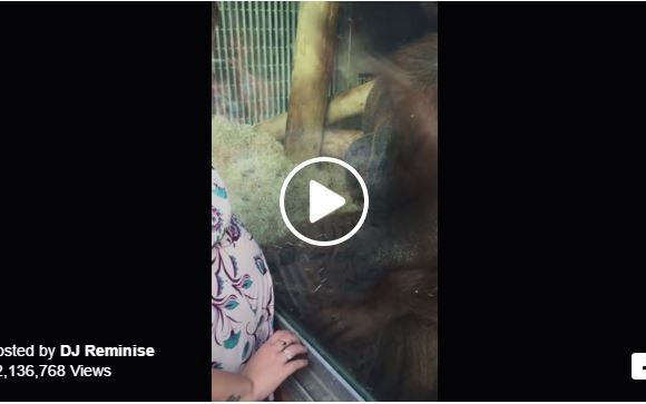 A Pregnant Woman Puts Her Belly On The Glass; What Happens Next Is So Sweet