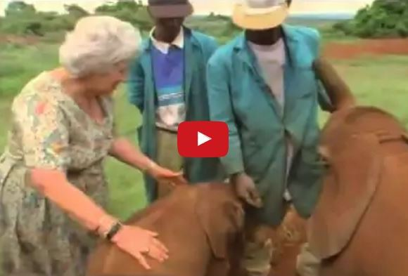 Elephants Line Up To Hug This 81 Year Old Woman…The Reason Why Will Leave You Speechless!