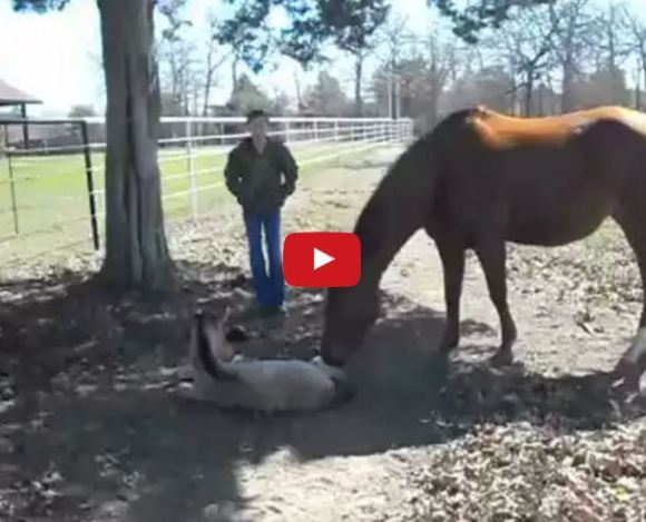 This Sweet Foal Sneezes And His Reaction Is PRICELESS!
