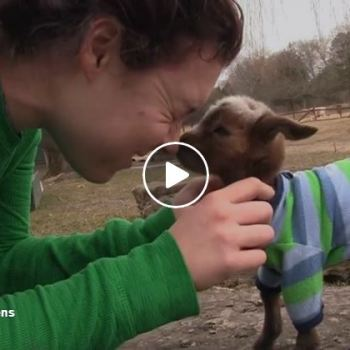 This Baby Goat's First Day In The World Will Fill Your Heart With Joy!