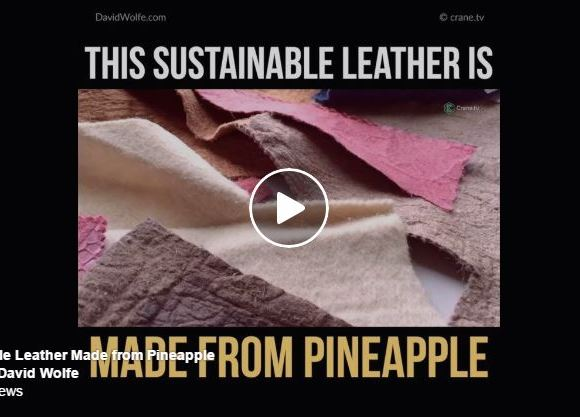 This Sustainable Leather Is Made From Pineapple!