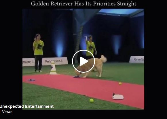 Golden Retriever Shows Everyone What's Important In Life