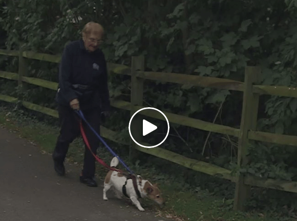 97-Year-Old Woman Walks 10 Dogs A Day For Local The Shelter