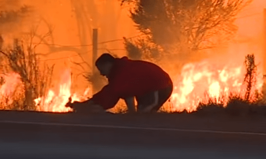 Man Saves Wild Rabbit From California Wildfires