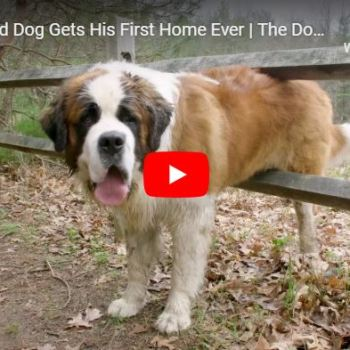 Giant Dog Gets His First Home Ever!