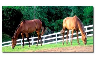 Horse Retirement Farm for Your Favorite Equestrian