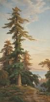 http://commons.wikimedia.org/wiki/File:Redwood_Trees,_Santa_Cruz_Mts.,_Cal._(Boston_Public_Library).jpg