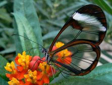 http://commons.wikimedia.org/wiki/File:South-American_butterfly.jpg