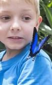 https://commons.wikimedia.org/wiki/File:Butterfly_2_(15326785158).jpg