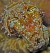 https://commons.wikimedia.org/wiki/File:Cuttlefish_-_Sepia_prashadi.jpg