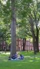 https://commons.wikimedia.org/wiki/File:Harvard_Yard,_Dudesleeper.jpg
