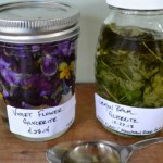 Lemon-Balm-and-Violet-Tinctures