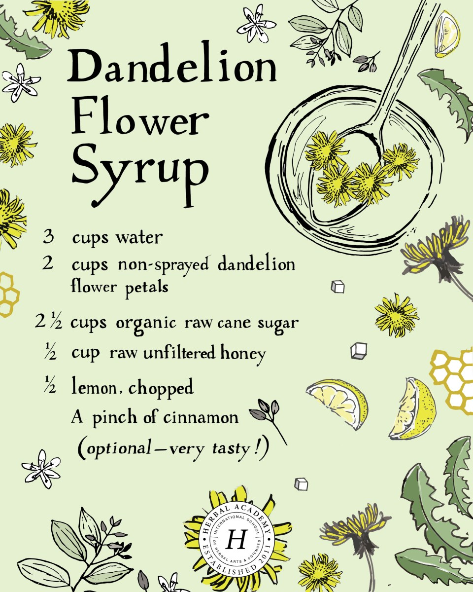 Dandelion Flower Syrup – full directions on Herbal Academy blog