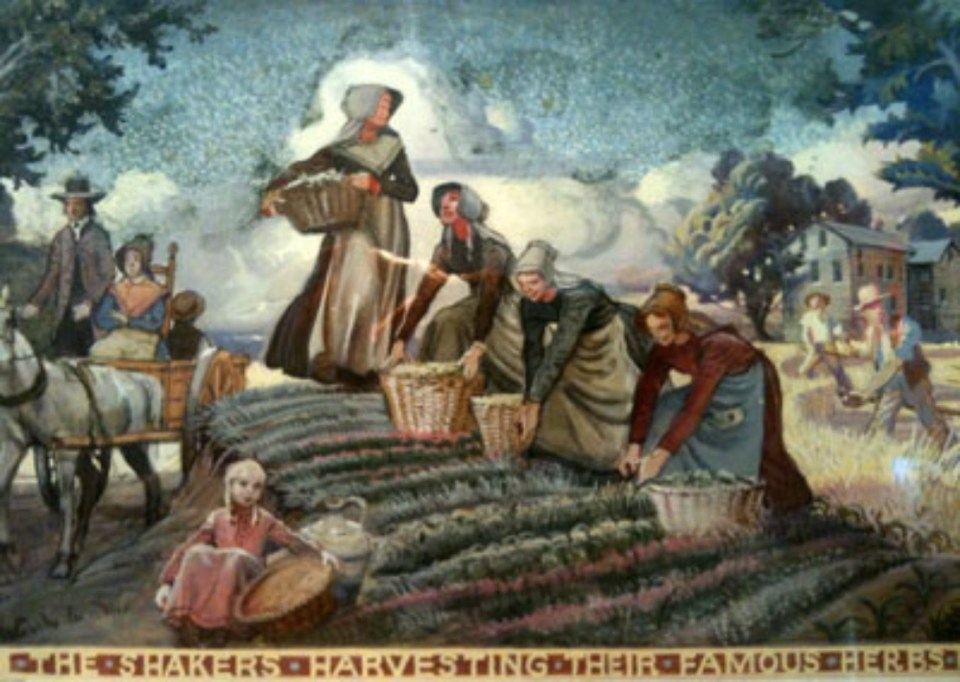 The_Shakers_harvesting_their_famous_herbs