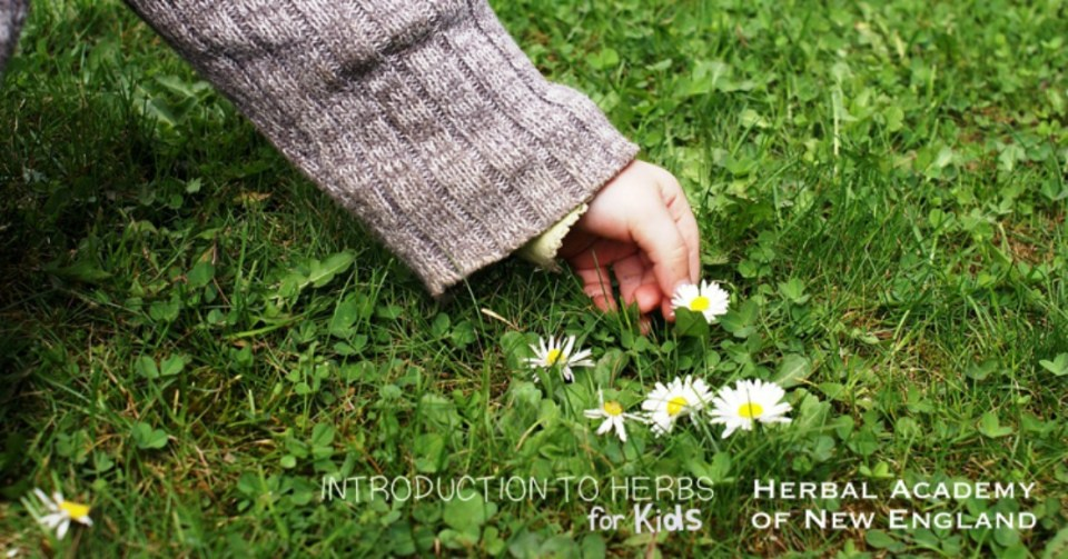 Introduction to Herbs for Kids