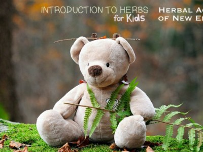 Introduction To Herbs For Kids: Wildcrafting | Herbal Academy | Wildcrafting for Kids Lesson - It is time to get to know your local plants because we can find wild herbal friends growing all around us!