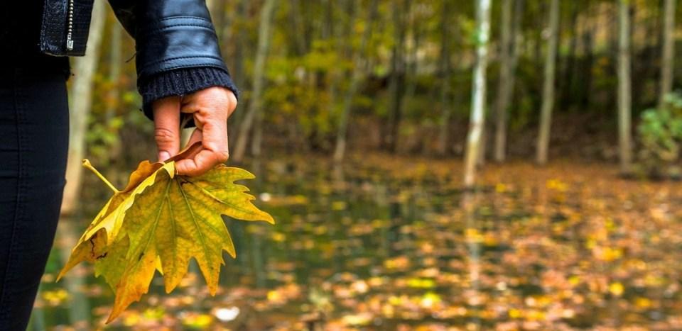 Holding-Autumn-Leaf