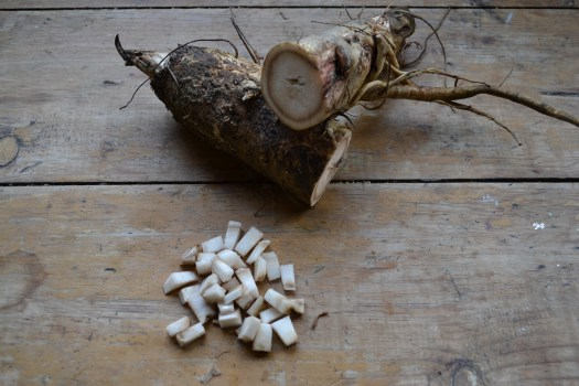 How To Make Pickled Burdock Root | Herbal Academy | Here's a simple recipe for pickled burdock root. By following this recipe, you can preserve some of burdock's beneficial properties to enjoy as a yummy snack year-round.