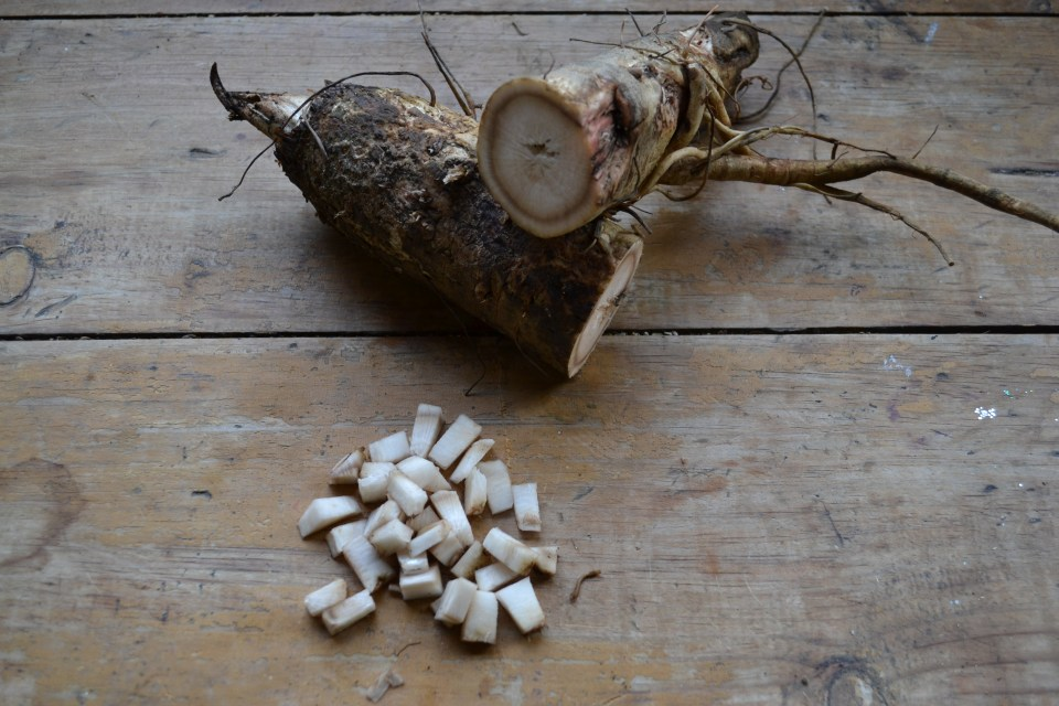 How To Make Pickled Burdock Root   Herbal Academy   Here's a simple recipe for pickled burdock root. By following this recipe, you can preserve some of burdock's beneficial properties to enjoy as a yummy snack year-round.
