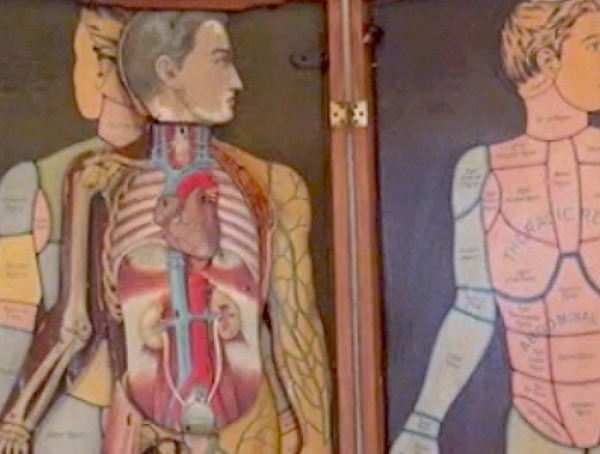 Anatomy in the Advanced Herbal Studies at the Herbal Academy