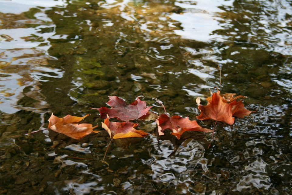 Autumn Energetics and Self-Care | Herbal Academy | When our body is in sync with autumn, we can use the autumn energetics to maintain balance and self-care.