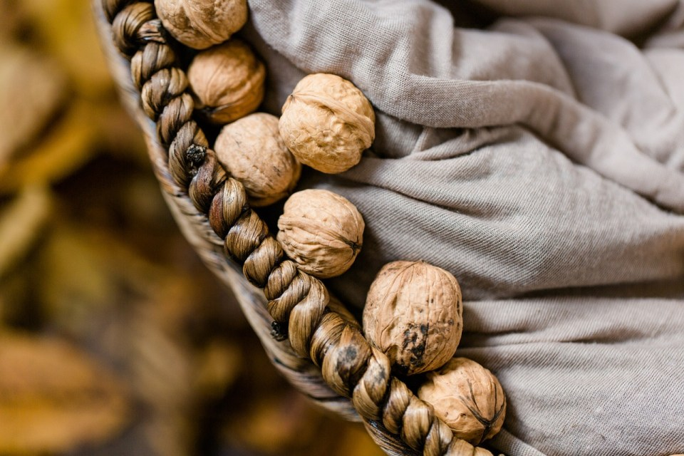 Approaching Inflammation and Chronic Pain Through Diet and Herbs | Herbal Academy | In this article we will explore the subject of inflammation and chronic pain and how diet and herbs can address these issues.