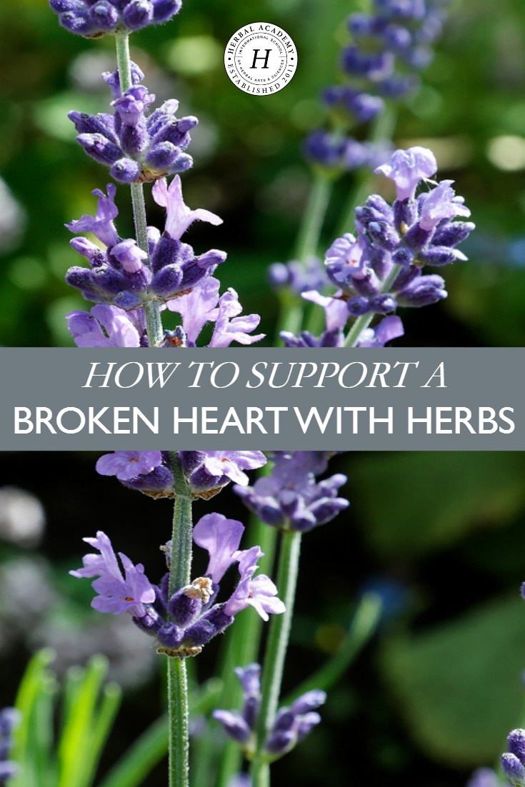 How To Support A Broken Heart With Herbs – Herbal Academy