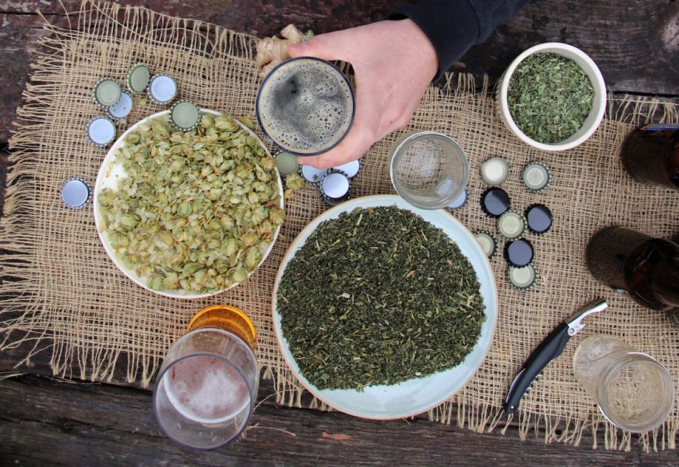 Nettle Beer: A Delicious, Healthy Herbal Ferment | Herbal Academy | Make your own nettle beer with this sneak peak inside our new course, The Craft of Herbal Fermentation!