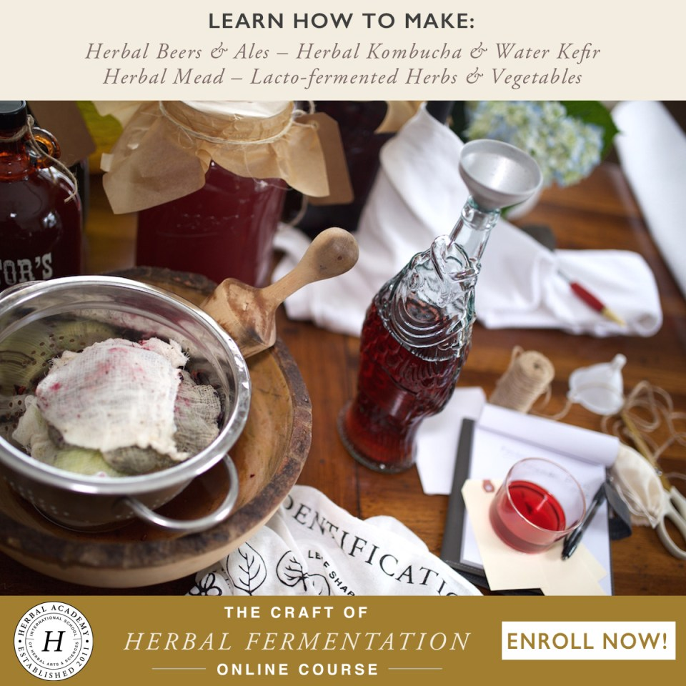 Now Enrolling: The Craft of Herbal Fermentation   Herbal Academy   Join us in our newest short course. Learn to make herbal beer, mead, and wine, herbal kombucha and water kefir, and lacto-fermented foods!