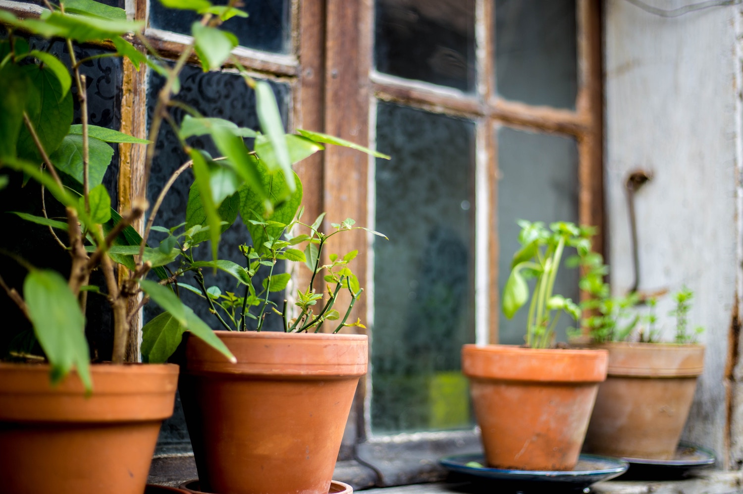How To Grow Culinary Herbs Indoors During The Winter | Herbal Academy |  Would You Like