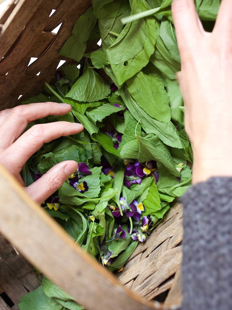 The Herbal Academy program –Botany and Wildcrafting Course