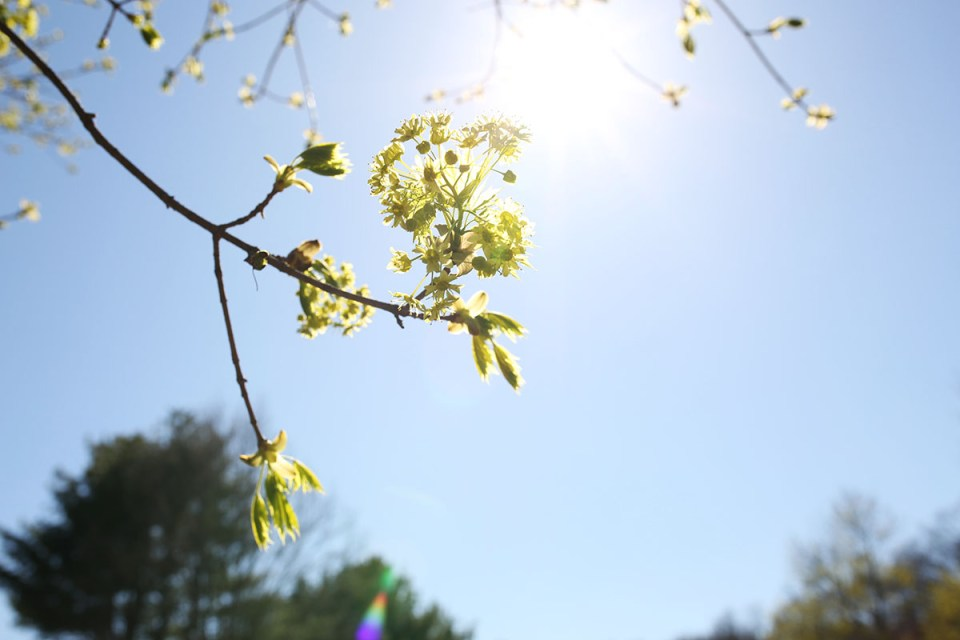 What the Spring Equinox Means to the Herbalist | Herbal Academy | For the herbalist, the Spring Equinox is a time for new beginnings, whether with your studies, your health, or your business. Learn more in today's post!