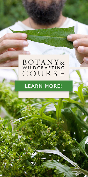 Learn how to wildcraft and identify plants confidently in the Botany & Wildcrafting Course!