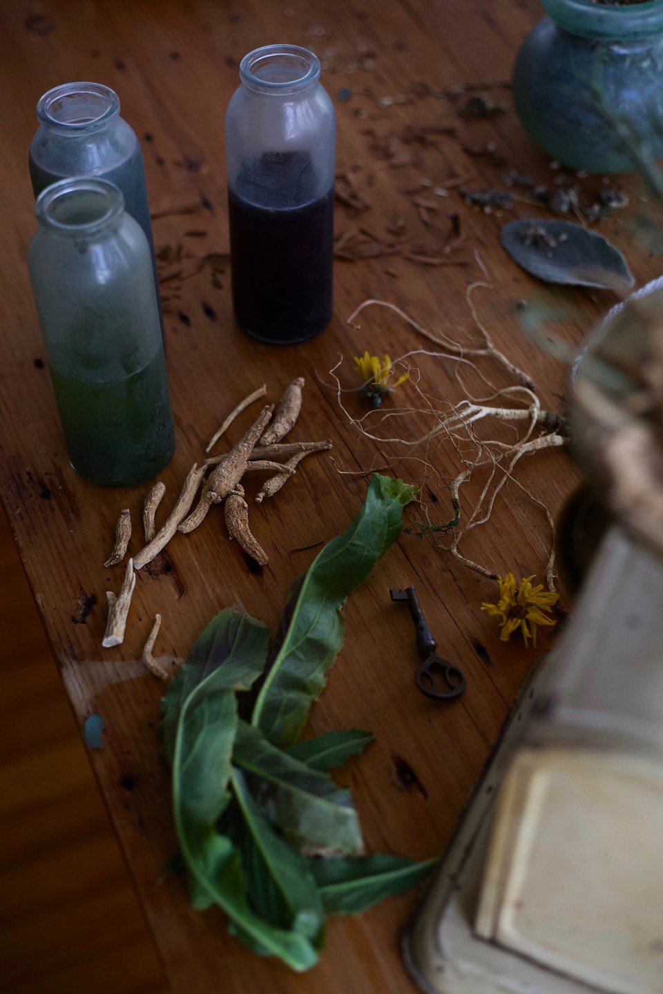 Herbalism: A History - How Herbalists Of The Past Paved The Way For Today | Herbal Academy | Have you ever wondered how modern-day herbalism came to be? Read on to discover how the history of herbalism paved the way for today.