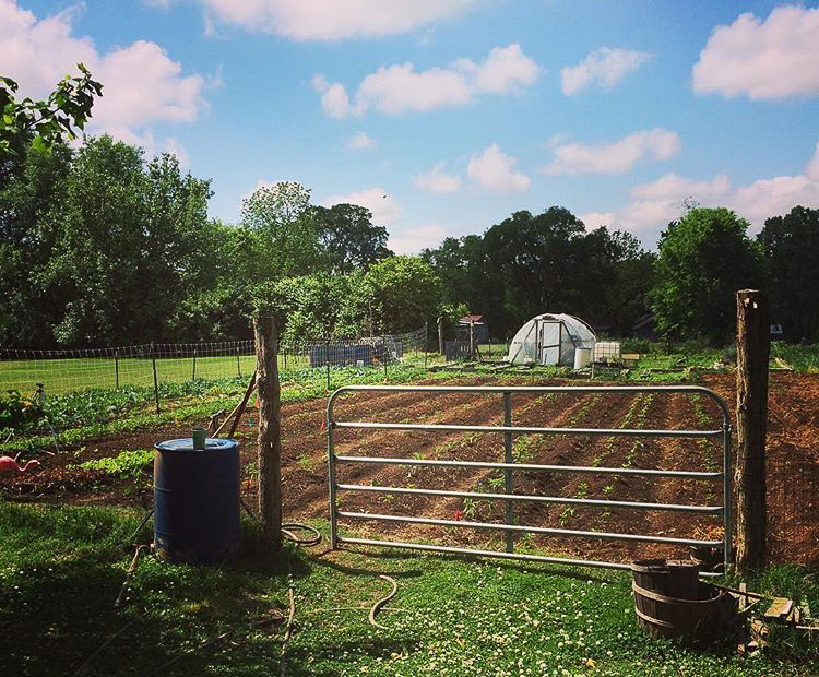 Urban Farming in Nashville, Tennessee: A Family Lineage | Herbal Academy | We fancy farmers, and we know you do too. Learn how one Nashville farmer is using urban farming to inspire others in healthy living while continuing her family legacy.