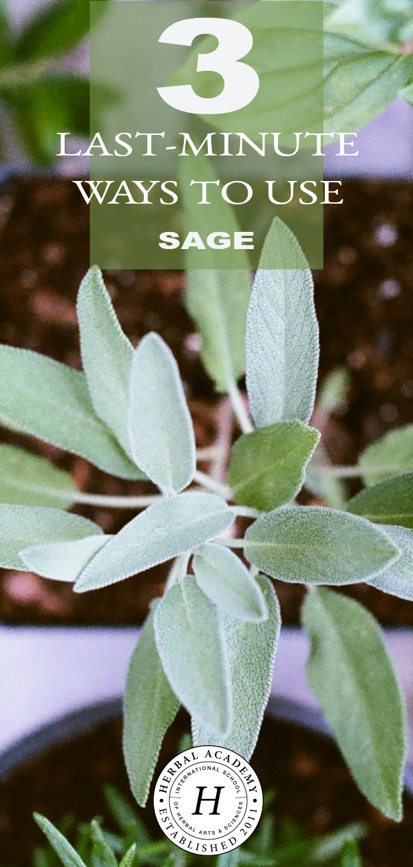 3 Last-Minute Ways To Use Sage Before The Growing Season Ends | Herbal Academy | If you're looking for ways to use your fresh sage before cold weather comes and the harvest period passes, here are 3 last-minute ways to use sage.