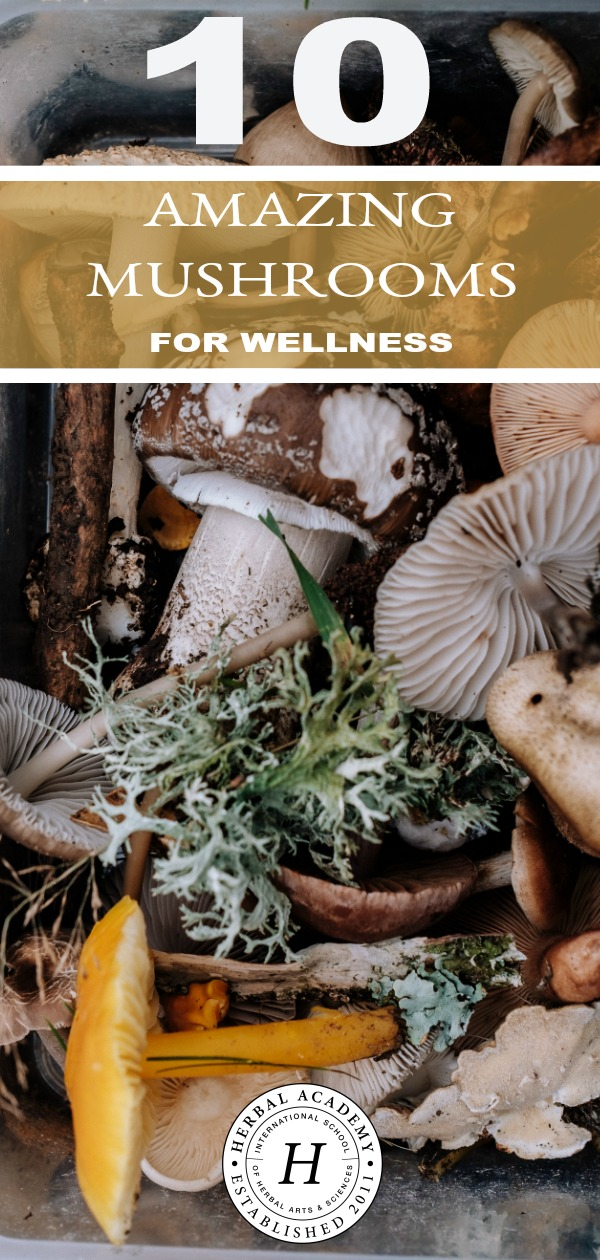 10 Amazing Mushrooms For Wellness (+ Free Mushroom Download) | Herbal Academy | Learn how you can use 10 amazing mushrooms for wellness, and get a free mushroom graphic download to help you remember them too.