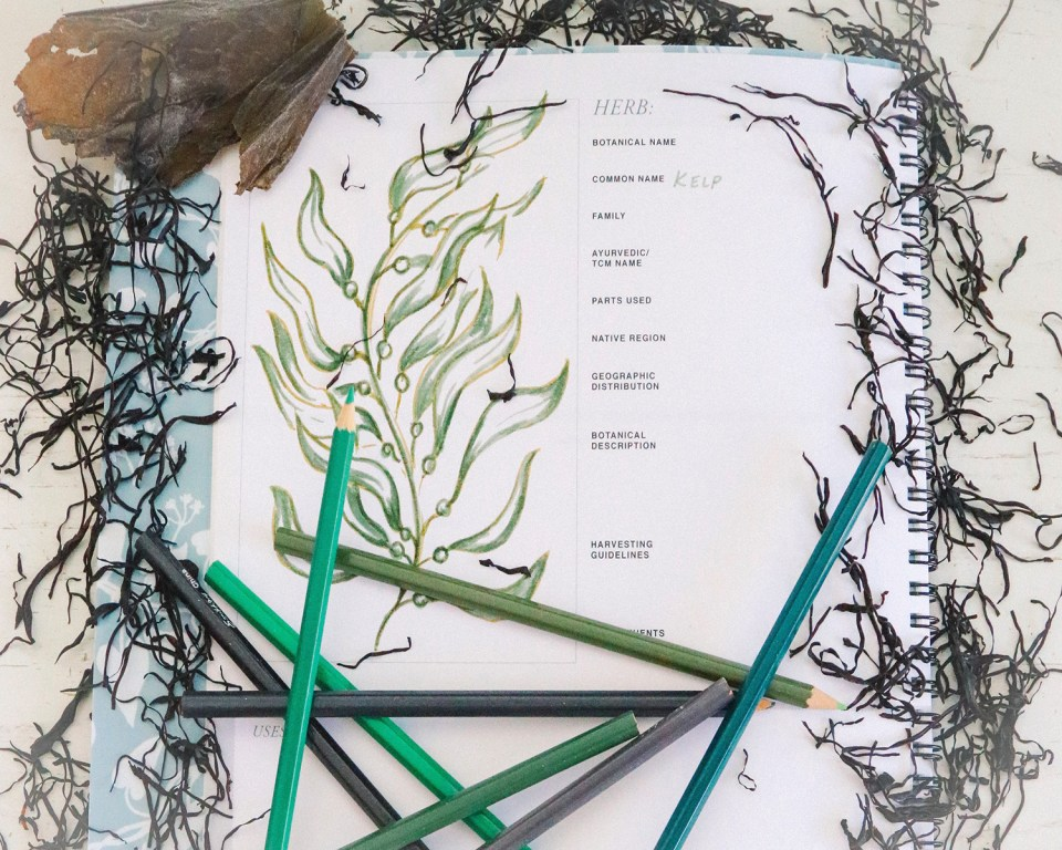 Seaweed 101: What You Need To Know   Herbal Academy   Seaweed can be a nutritive, wellness-promoting, and tasty addition to your herbal formulas, diet, and self-care routine! Read on to learn more!