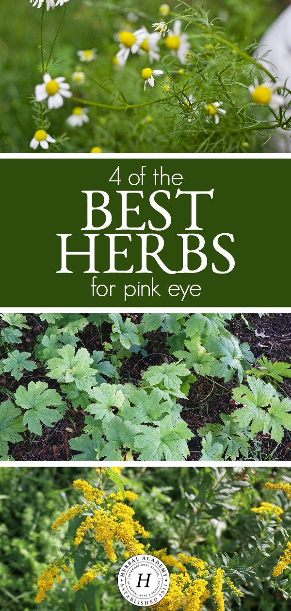 4 of the Best Herbs for Pink Eye | Herbal Academy | Looking for herbs to help soothe the discomfort of pink eye and ease symptoms faster? Here's are some of the best herbs for this common childhood ailment.