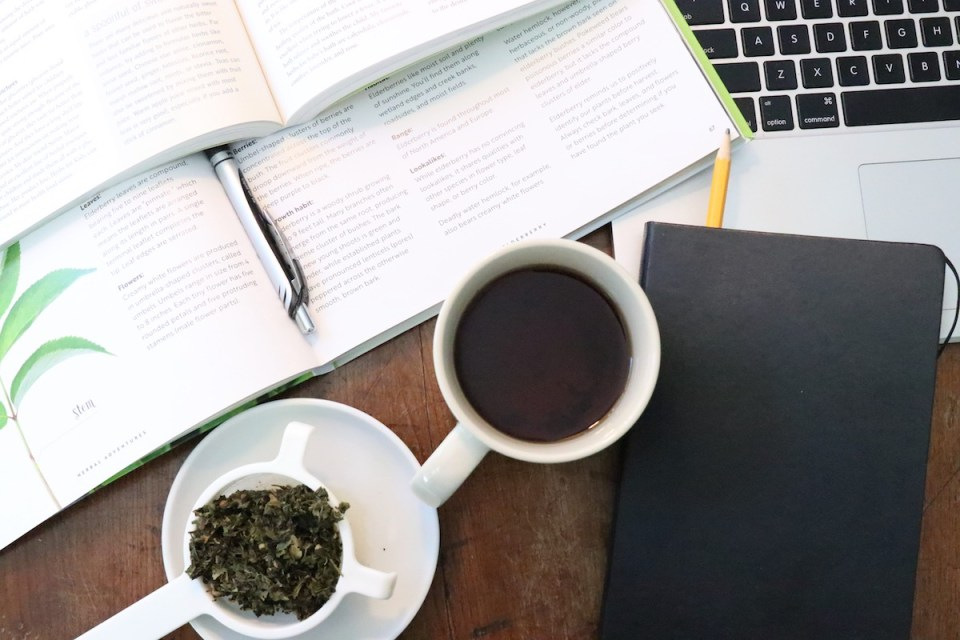 Our Favorite Herbs to Help You Get Your Study On (Plus, a DIY Memory Tonic Tea Recipe!) | Herbal Academy | Here are some of our favorite study herbs that can help you cope with stress, stay focused, and calm your mind during this hectic back to school season!