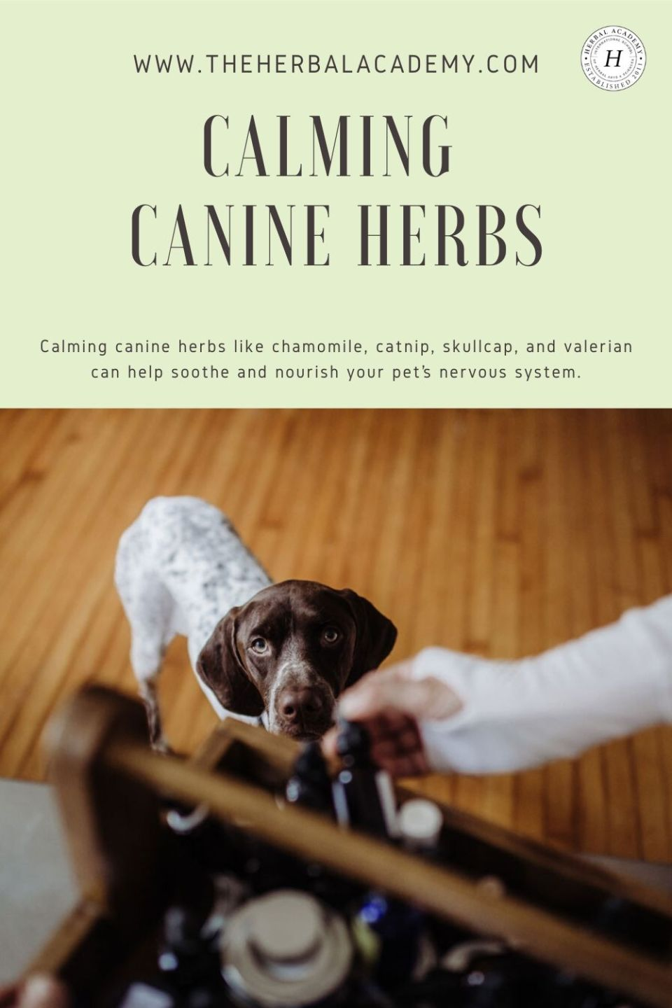 Calming Canine Herbs for Your Four-Legged Friends   The Herbal Academy   Calming canine herbs like chamomile, catnip, skullcap, and valerian can help soothe and nourish your pet's nervous system.