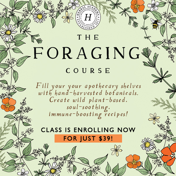 Join us in The Foraging Course for just $39!