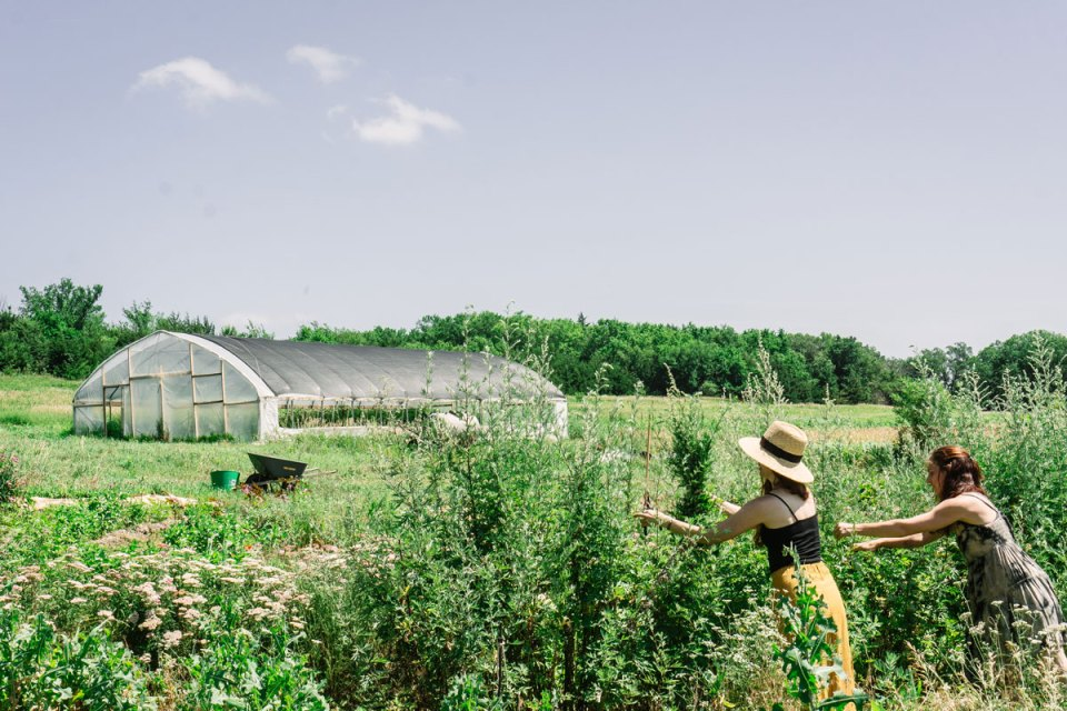 Two women harvesting herbs in field with greenhouse in background