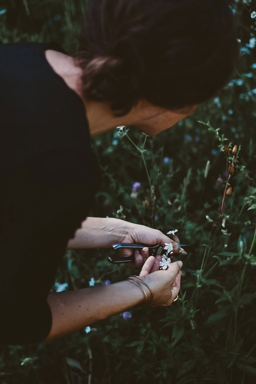 Ashley york harvesting a plant