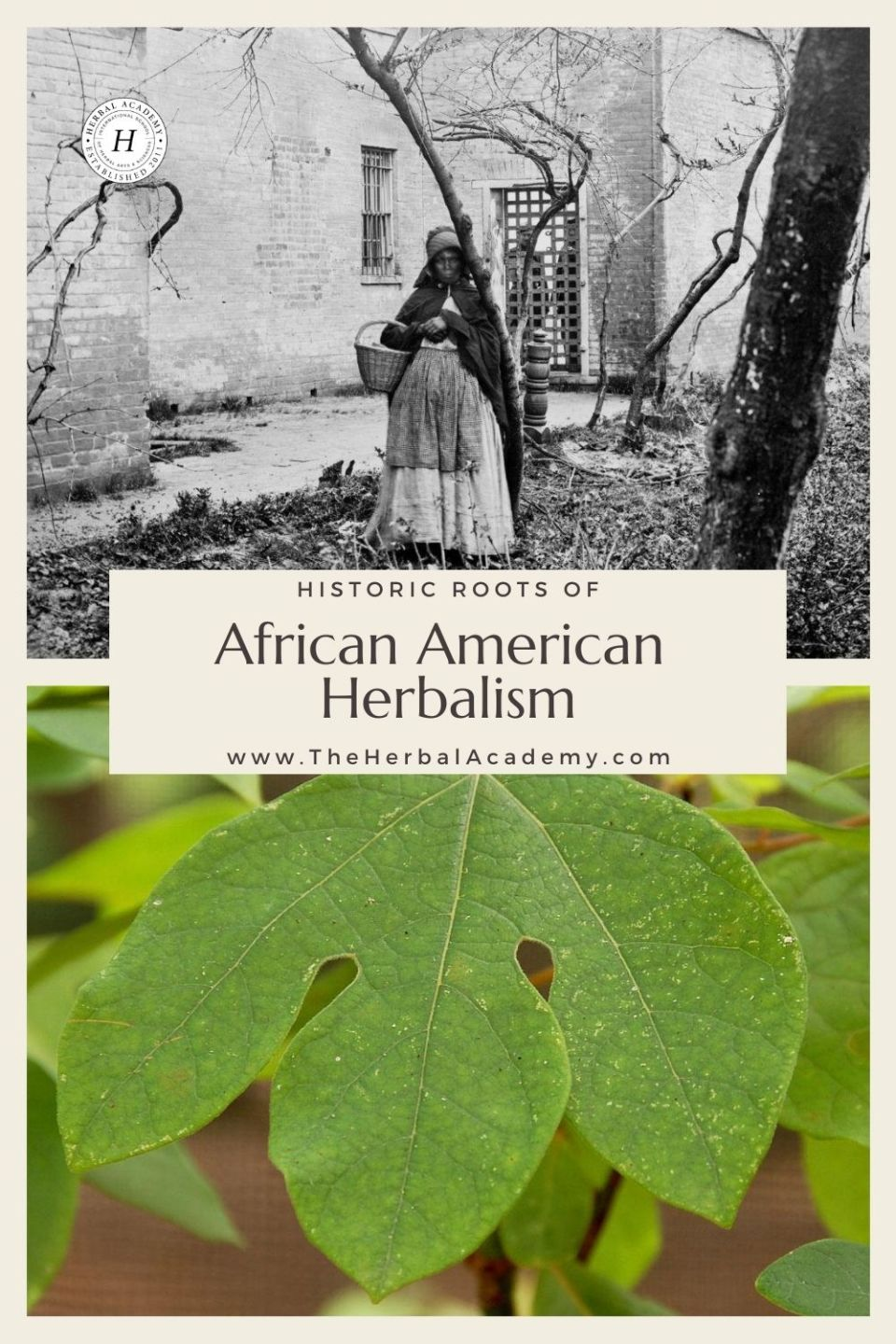 "Pinterest graphic for Herbal Academy article about ""Historic Roots of African American Herbalism"""