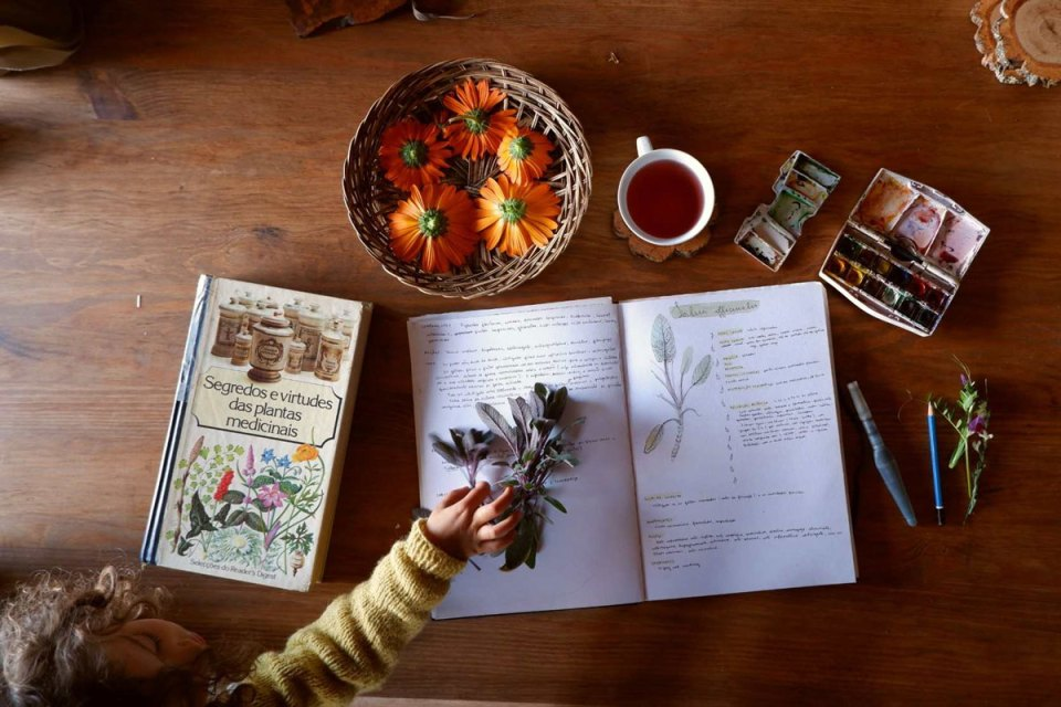 Herbal books on table, photo by Cat Seixas